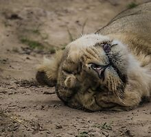 Sleeping Lioness by Jack Steel