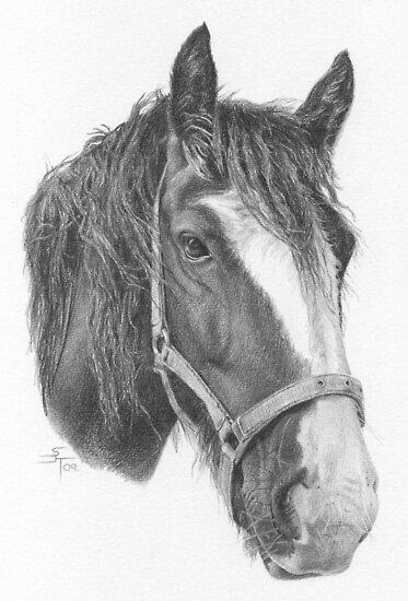 A4 Portrait Commission (Sugar) by Sami Thorpe