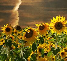 Sunflower Sunset by Maria Dryfhout