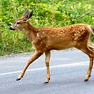 Why does the fawn cross the road?   by RichImage