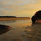 Setting Sun catches Rocks by Billlee