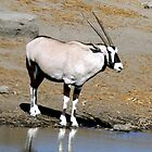 The Oryx by Graeme  Hyde