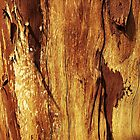Wood Grain Texture Design  by Sookiesooker