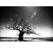 Dinner tree constellations Photographic Print
