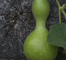 Garden Gourd by Patricia Ledbetter