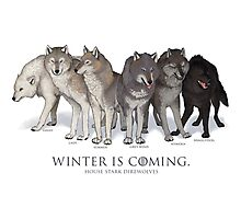 WINTER IS COMING- House Stark Direwolves Photographic Print