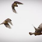 Cedar Waxwings by gerardofm4