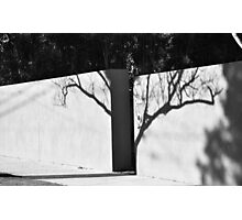 shadow tree Photographic Print