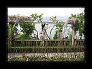 Garden at Villa Ephrussi by Roberta Angiolani