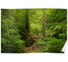 Magic Rainforest Poster