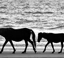 Walking the Beach by Roger  Swieringa
