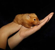 Hamster In The Hand by Jollyrobin
