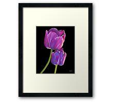 Plum Purple Tulips Framed Print