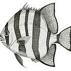 Spadefish by Jeno Futo
