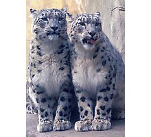 Twin young Snow Leopards Photographic Print