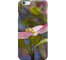 blooming magnolia flowers in spring iPhone Case/Skin