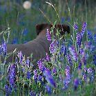 purple flowered jack by Amanda Huggins