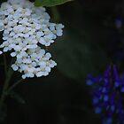 more flowers... by Amanda Huggins