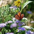 Butterfly Bouquet by worldtripper