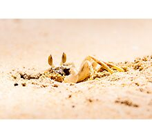 Closeup of Crab digging a hole in the sand Photographic Print