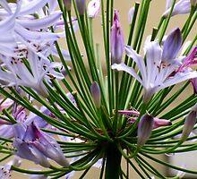 Flowering Beauty by Lynnrmorris