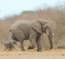 Elephant Love - Keeping up with Dad - African Wildlife by LivingWild