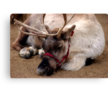 Reindeer waiting for Santa, Happy waiting Canvas Print