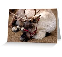 Reindeer waiting for Santa, Happy waiting Greeting Card