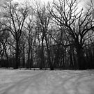 Snow in Black and White by KendraJKantor