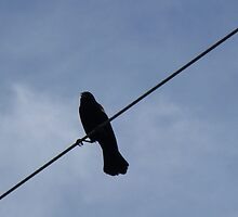Bird On A Wire by WildestArt