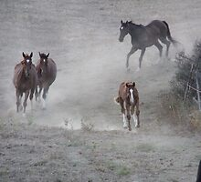 Galloping Dust by atkar