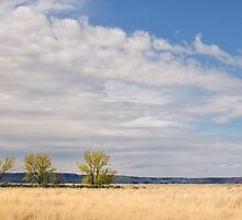 Trio of Trees in the Grand Coulee by lkamansky