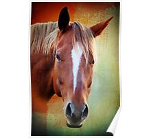 horse  Poster