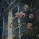 Window Roses by Citizen