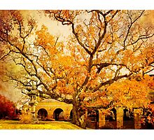 Autumn Oak Photographic Print