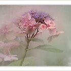 Flower love  by Johanna26