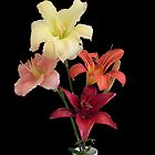 Lily Colours by Martha Medford