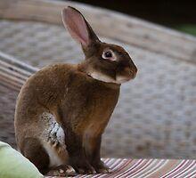 The Alice Rabbit by byronbackyard