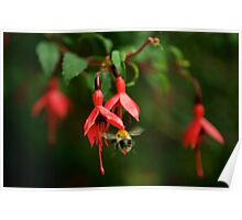 Fuchsia at Loch Na Fooey (wide) Poster