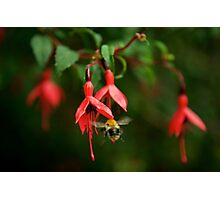 Fuchsia at Loch Na Fooey (wide) Photographic Print