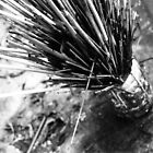 Prickly by godtomanydevils