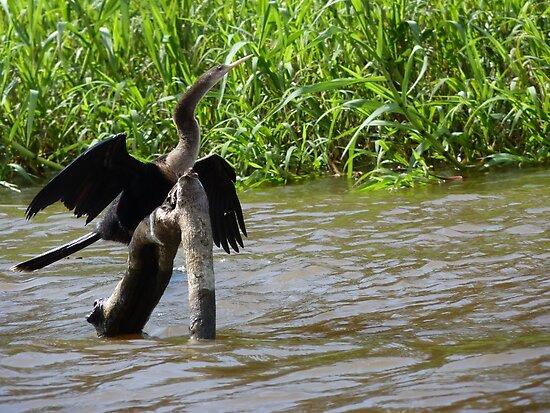 Cormorant by godtomanydevils