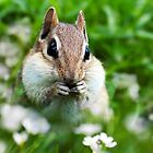 Chipmunk Subtle Strategist by Christina Rollo