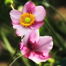 Pink Japanese Anemone by Sharon Woerner