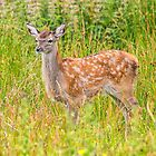 Red Deer Fawn by M.S. Photography & Art