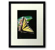 Swallowtail Butterfly and Milkweed Flowers Framed Print