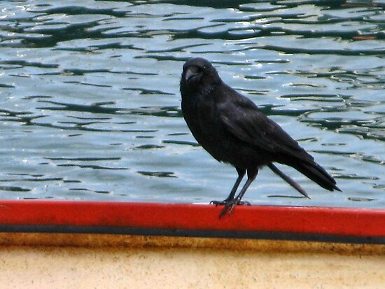 Crow Aboard  by lynn carter
