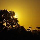 Sunrise over New Norcia by lezvee