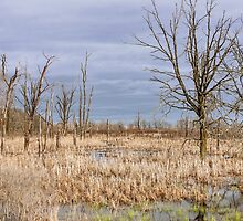 Wetland Beauty by April Koehler