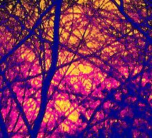 Sunset Through Branches by nharveyart